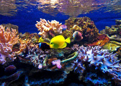 Znalezione obrazy dla zapytania oceanarium w przedszkolu\